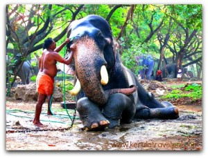 elephant_washing_at_anakotta_guruvayoor
